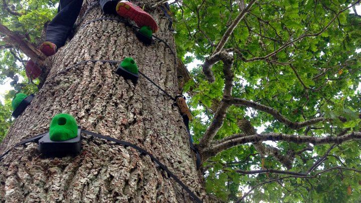 Tree Climbing - Exmoor