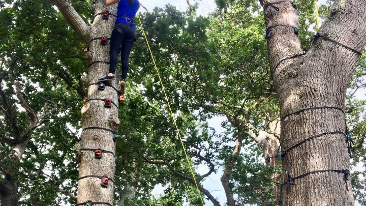 Tree Climbing - Exmoor Adventures