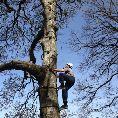 Tree Climbing on Exmoor